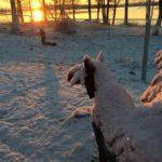 Snöig vy med sjön Yngen i bakgrunden och solnedgång