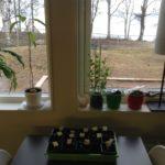 Flera små planteringar och några större växter